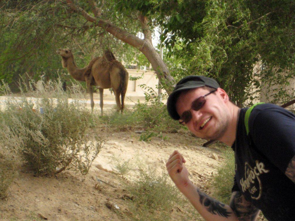 Dubai UAE Camel