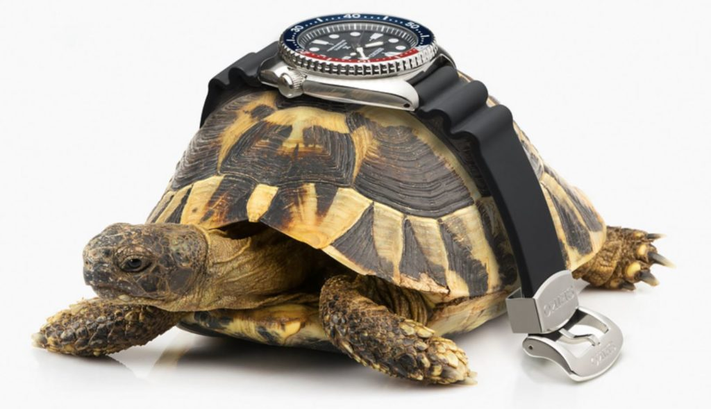 Seiko-Turtle